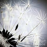 Dandelion Art Print by Elena Elisseeva