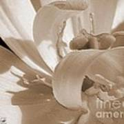 Double Late Tulip Named Angelique Art Print
