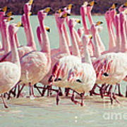 Flamingos On Lake In Andes Art Print