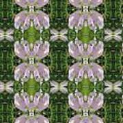 Flowers From Cherryhill Nj America Silken Sparkle Purple Tone Graphically Enhanced Innovative Patter Art Print