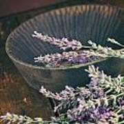 Fresh Lavender Art Print