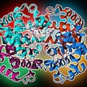 Haemoglobin Molecule Art Print by Science Photo Library