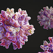 Infectious Bursal Disease Virus Art Print