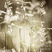 June Grass Flowering Art Print