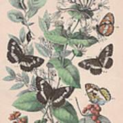 Nymphalidae Art Print