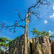 Old And Ancient Dry Tree On Top Of Mountain Art Print