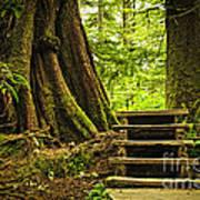 Path In Temperate Rainforest Print by Elena Elisseeva