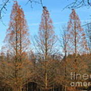 3 Pines Art Print