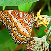 Plain Tiger Butterfly Art Print
