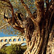 Pont Du Gard Art Print