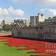 Remembrance Poppies At The Tower Of London Art Print