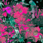 Rose 72 Art Print