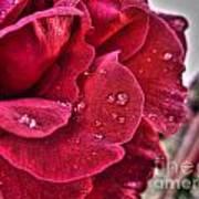 Red Rose And Summer Rain Art Print