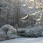 Snowy Trees Landscape Art Print