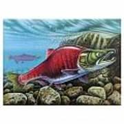Sockeye Salmon Art Print