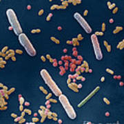 Species Of Bacteria Art Print