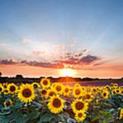 Hope - Sunflower Summer Sunset landscape with blue skies Art Print
