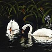 Swans II Art Print