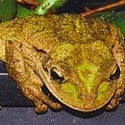 Treefrog Art Print