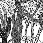 3 Trees Tree Cubed Tree Four Tree Cubed Black White Art Print