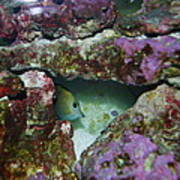 Tropical Fish In Cave Art Print