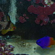Tropical Fish Art Print
