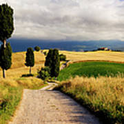 Tuscany Art Print by Brian Jannsen