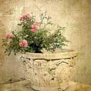 Vintage Blossom Art Print