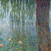 Waterlilies Morning With Weeping Willows Art Print