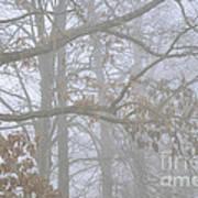 White Oak Tree In Fog Art Print