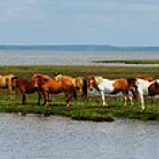 Wild Horses Of Assateague Island Art Print