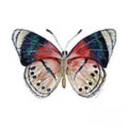 30 Perisama Vaninka Butterfly Art Print
