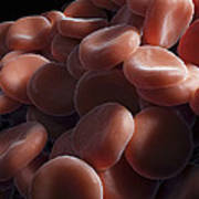 Red Blood Cells Art Print