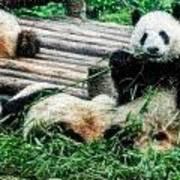 3722-panda -  Embossed Sl Art Print