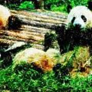 3722-panda -  Pastel Pencils Art Print