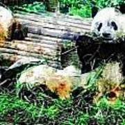 3722-panda -  Plein Air 1 Sl Art Print