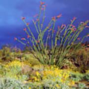 Usa, California, Anza-borrego Desert Art Print