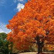 A Blanket Of Fall Colors Art Print