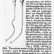Anton Van Leeuwenhoek Art Print