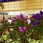 Beautiful Flowers Inside The Changi Airport In Singapore Art Print