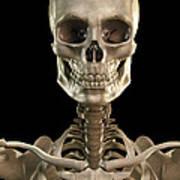 Bones Of The Head And Upper Thorax Art Print