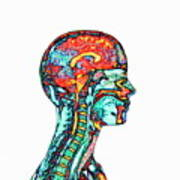 Brain And Spinal Cord Art Print