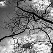 Branches And Clouds Art Print