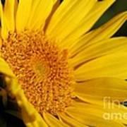 Chipmunk's Peredovik Sunflower Art Print