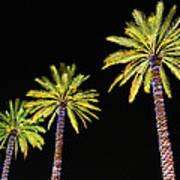 4 Christmas Palms Art Print
