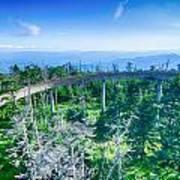 Clingmans Dome - Great Smoky Mountains National Park Art Print