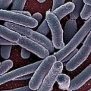 E Coli Bacteria Sem Art Print by Ami Images