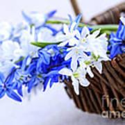 First Spring Flowers Art Print