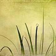Grass Art Print by Svetlana Sewell