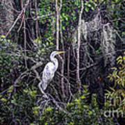 Heron Colors Art Print